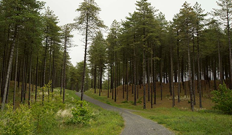 Pembrey forest with a trail
