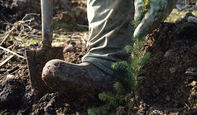 Person plating trees to create new woodland