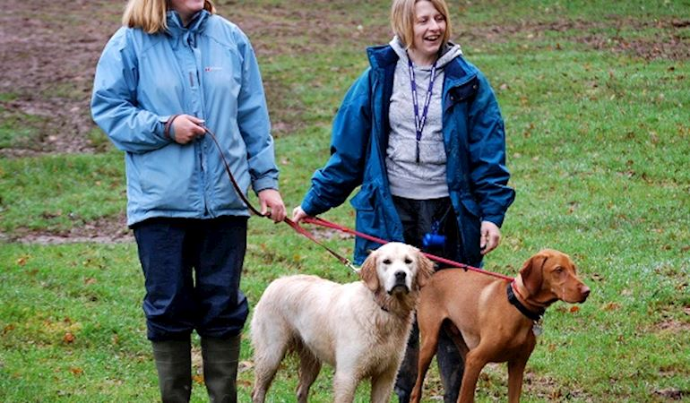 Two dogs on a walk (credit - the Kennel Club)