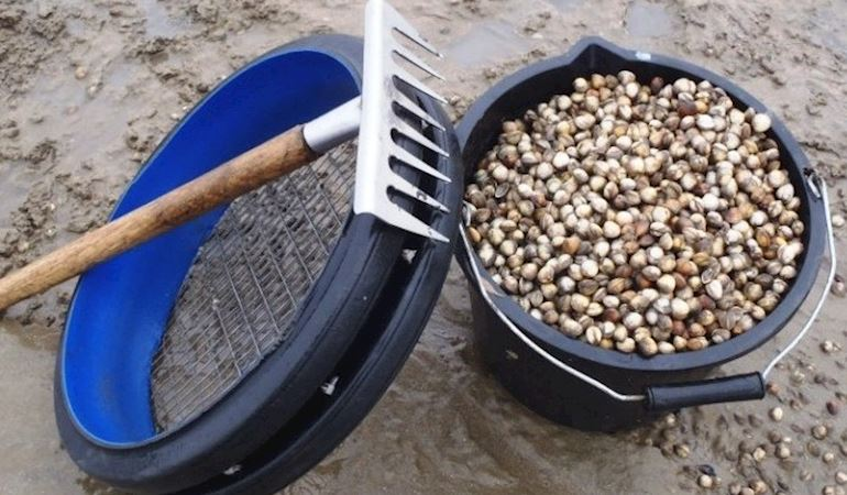 Cockling equipment next to a bucket filled with cockles