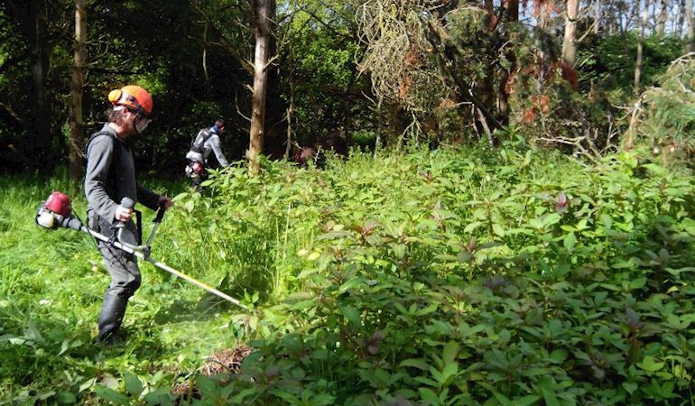Man cutting Himalayan balsam