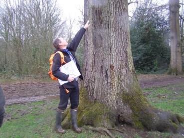 Man checking a tree