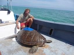 Tom Stringell next to a Sea turtle