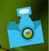 pollinator papparazzi