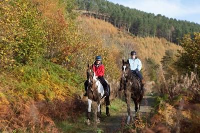 horse riders at coed llangyfan denbighshire