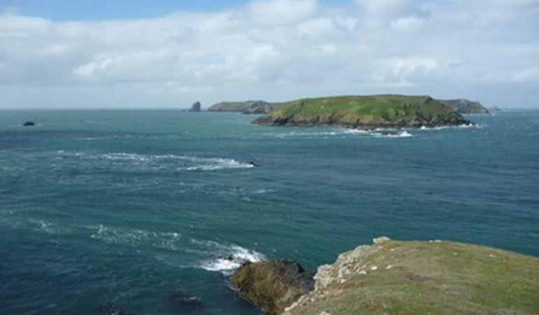 Skomer Marine Reserve picture