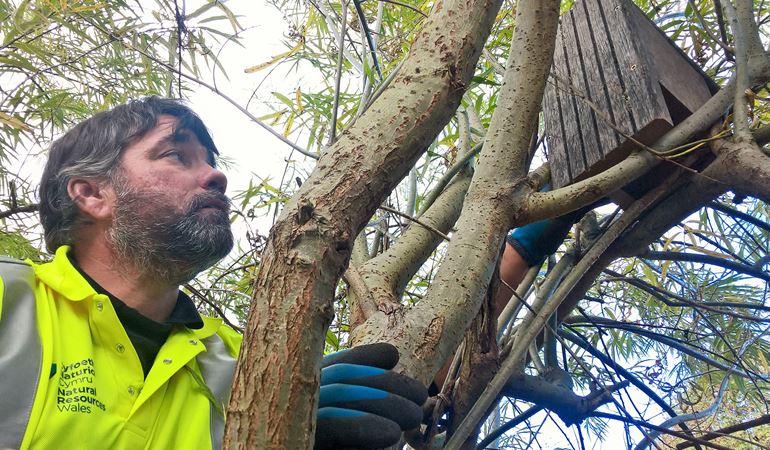 NRW staff member constructing bird box