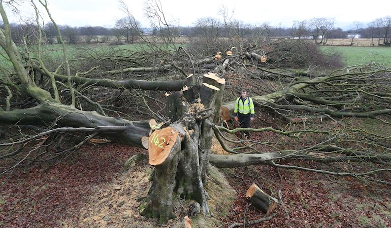 Image of trees that have been illegal felled