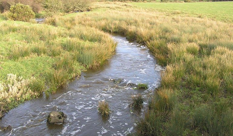 Slurry pollution incident at the river Afon Gwna