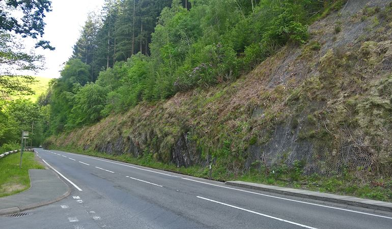 Roadside showing location of felling unstable trees