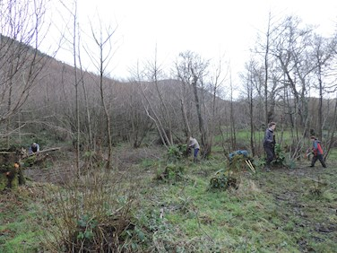 Coppicing in Coedydd Aber