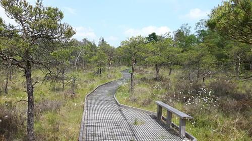 Boardwalk at Cors y Llyn