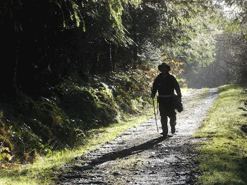 Man on trail in woodland