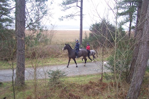 Horse riding in Newborough Forest