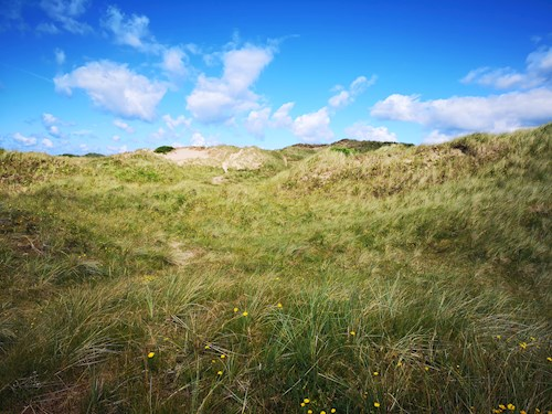 Dunes and wildflowers