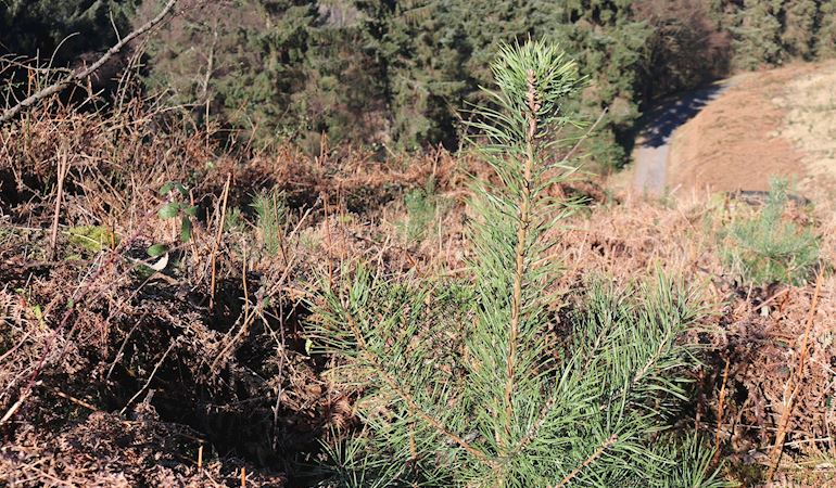 Image of vegetation at Cwmcarn