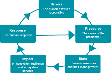 Our measures are set within the United Nations Driver-Pressure-State-Impact-Response framework. This helps us consider what drives environmental change, its impact and possible solutions.