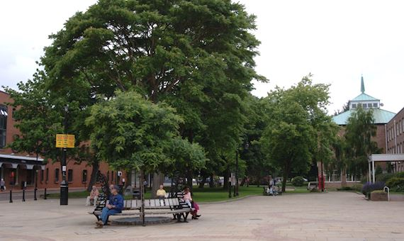 Trees and woodland in an urban setting in Wrexham