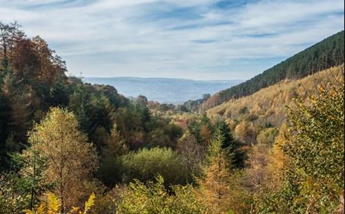 Llangwyfan woodland view