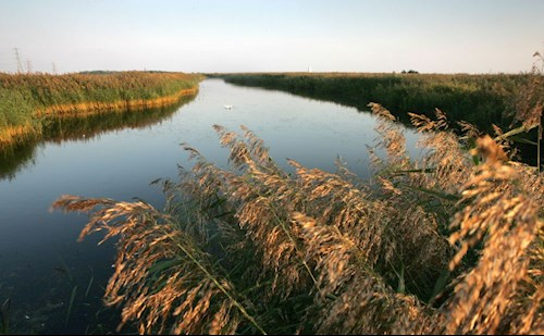 Uskmouth reedbeds