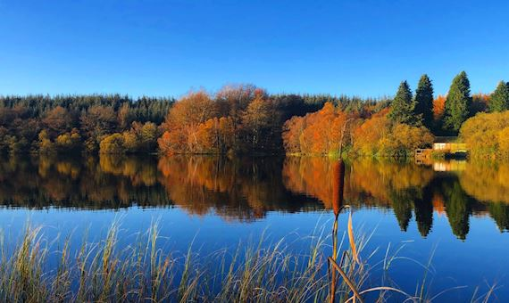 Landscape View Of Lake With Autumn Coloured Deciduous Trees In The Background, Against Clear Blue Sky