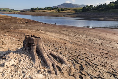 Llyn Celyn near Bala reservoir in drought conditions, with exposed tree stump.