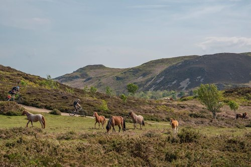 Mountain bikes and Wild ponies grazing on the Carneddau with remote and rugged mountain in background