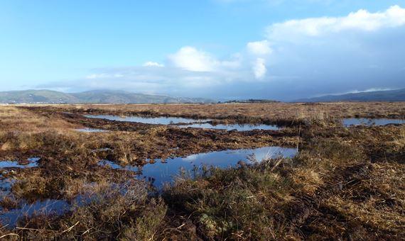 Peatland bog at Cors Fochno