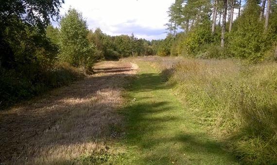 Pembrey Forest