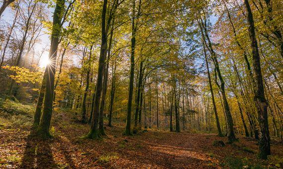 Minwear Forest