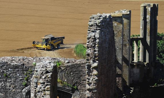 Raglan Castle in foreground with combine harvester in a field in background