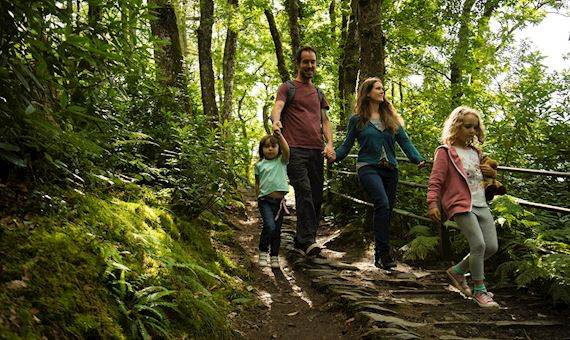 Family walking in woodlands