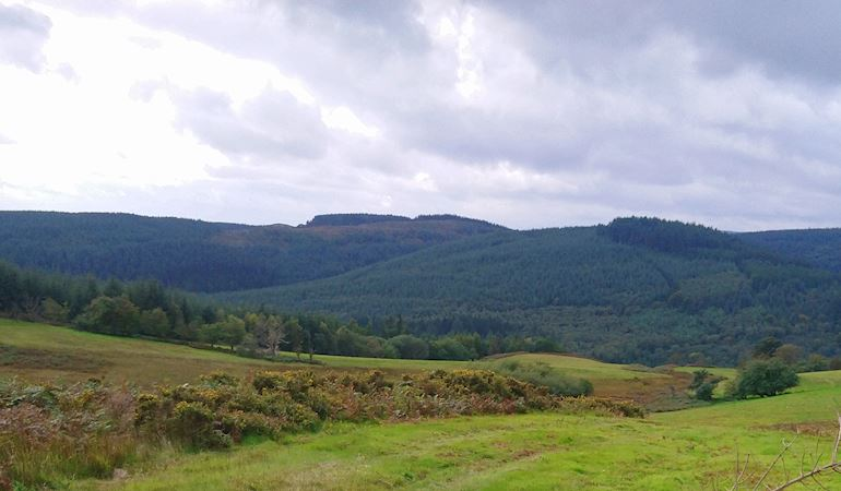 Panoramic shot of Dyfnant Forest