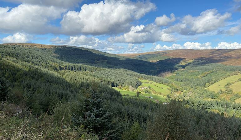 View of Mynydd Du Forest
