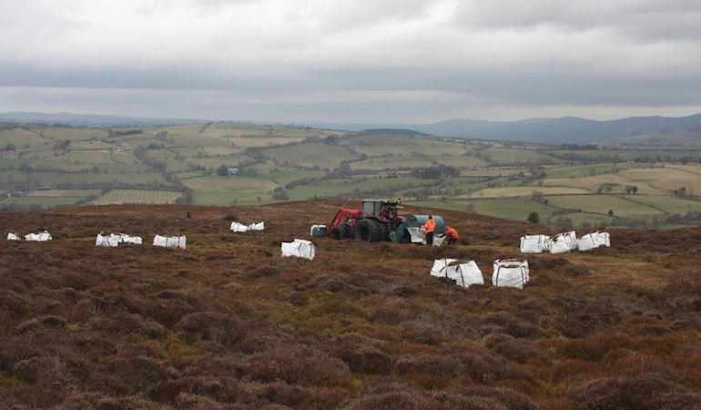 Heather being harvested and bagged before being airlifted