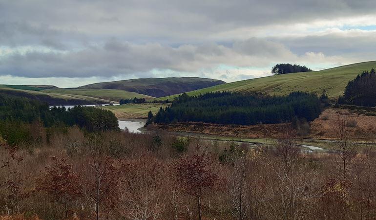 A Hafren Forest hillside and Llyn Clywedog