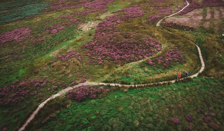 Two people walking on a winding path surrounded by purple heather