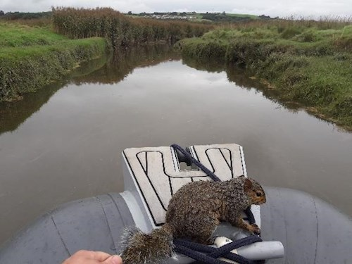 Squirrel on boat after being rescued
