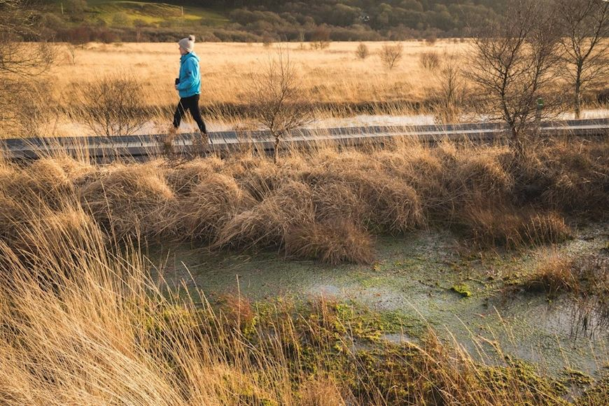 Photo Of Person Walking Along The Boardwalk At Cors Caron Raised Peat Bog In Winter